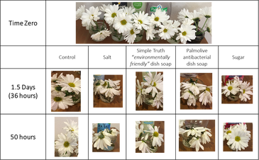 A data table of flower pictures showing how they are doing after 50 hours