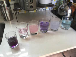 The liquids after the experiment. They are now pink, purple or blue